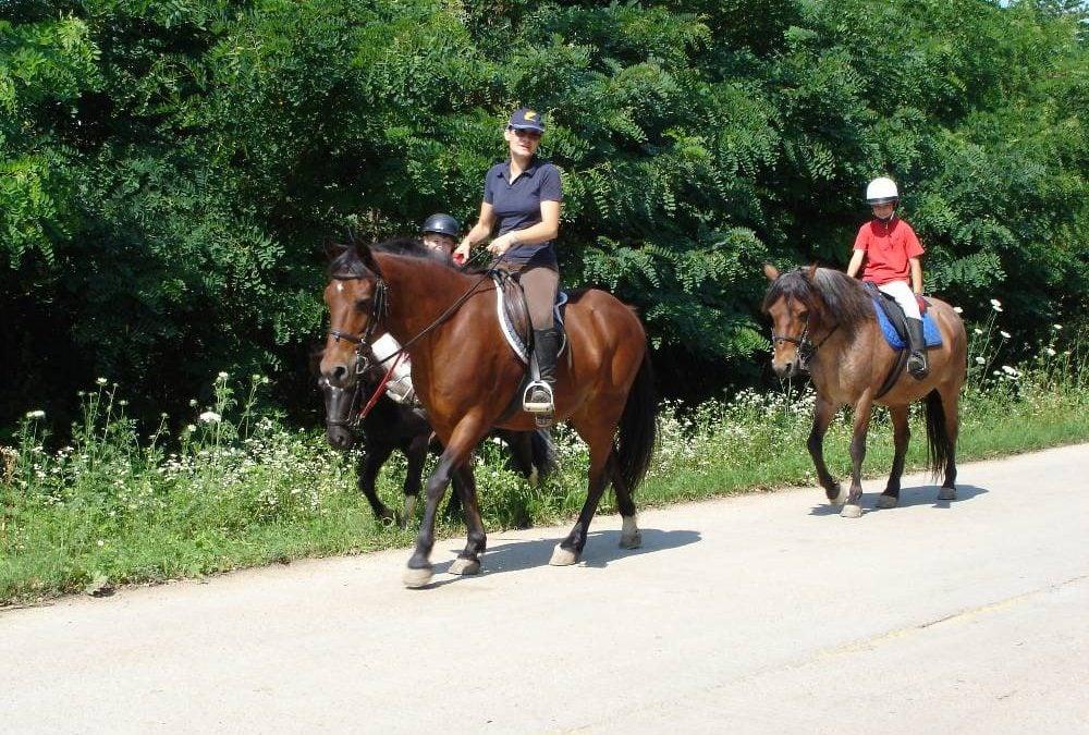 Nos chevaux en Roumanie