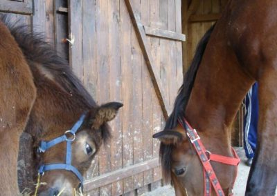 Ratafia 4 mois et Tsuica